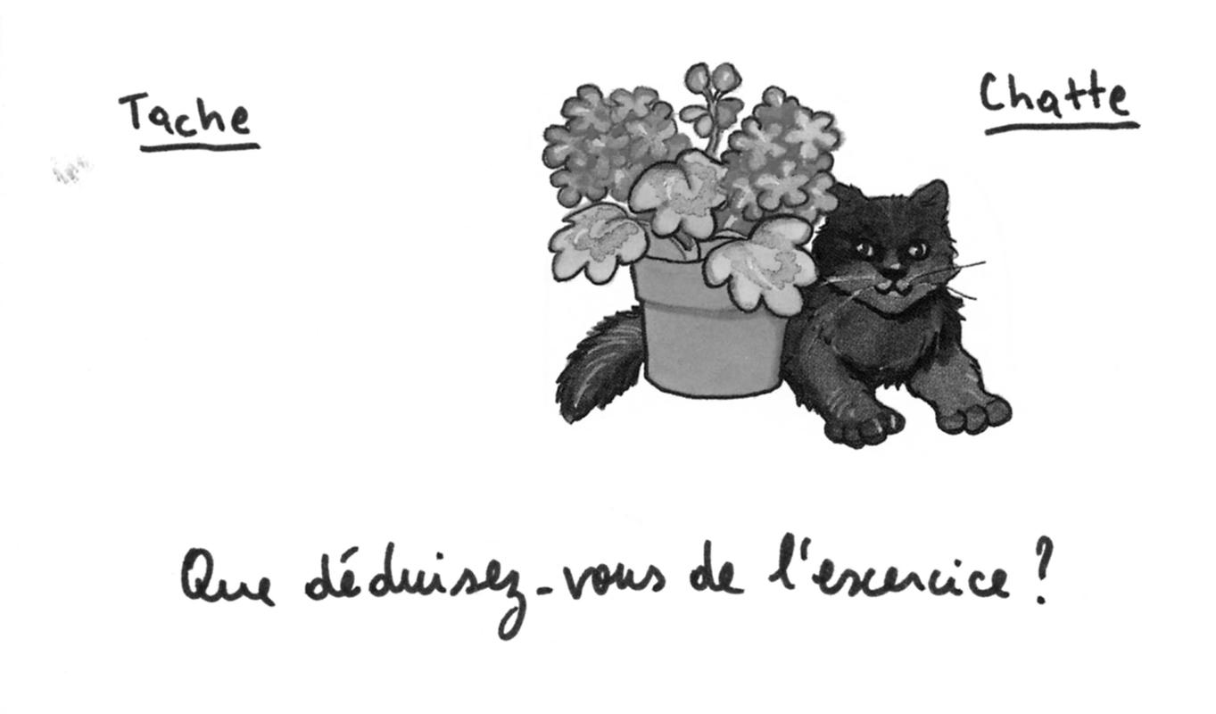 jeremiegrandsenne_tache-chatte